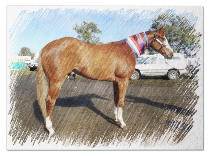 LND Totaly Awesome is BB's older half brother, Verry succesful in the show ring