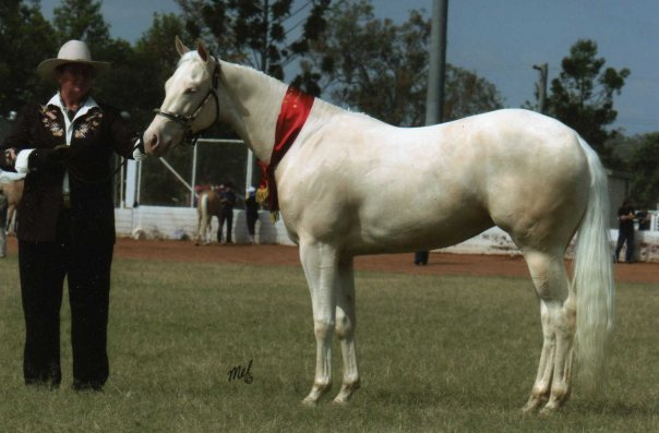 Dunlea White Oaks (Roxy) Back to the Show Ring in 2014
