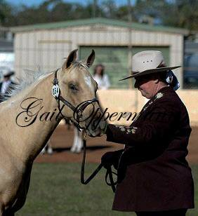Tassie at his first show at 9mth of age
