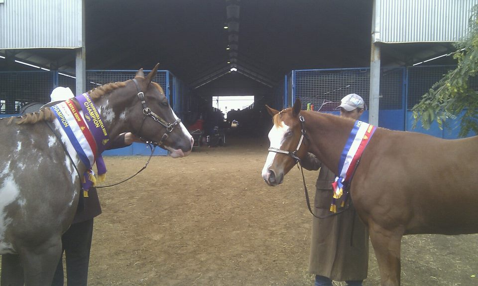 Brothers, Max and Alphy (CPS He's so Awesome) Toowoomba Show 2013