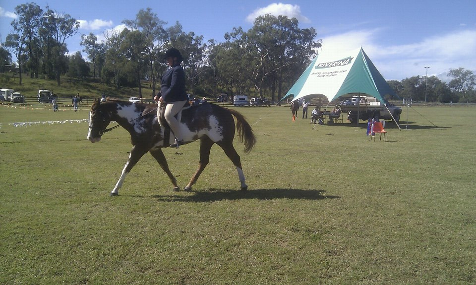 Alphy Goombungee Show 13, Jnr Hunter under saddle