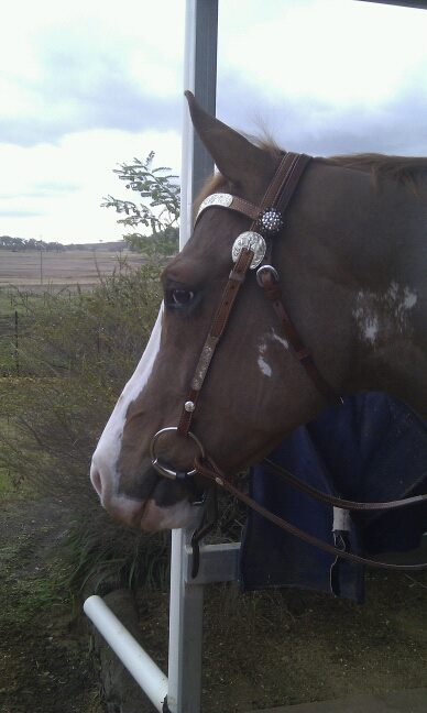 Alphy showing off his new bridle side on